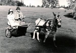 DonkeyKarts6